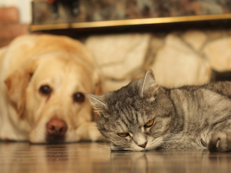 Do Dogs and Cats Have Long-Term Memories?