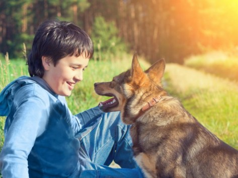 How Do Dogs Try To Communicate?