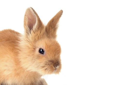 How Much Does it Cost to Care for a Rabbit?