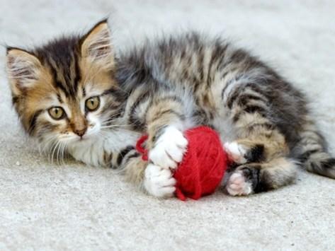 Is My Kitten too Hyper?