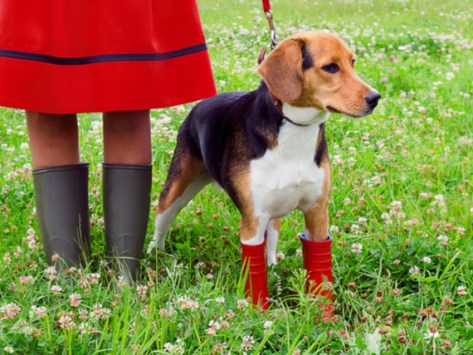 Rainy Day Dangers for Dogs