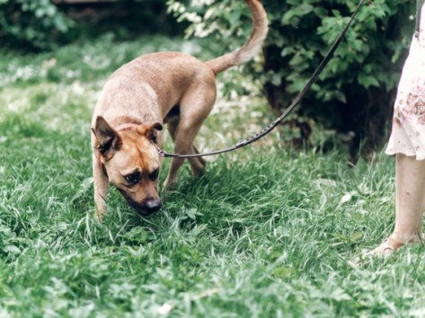 The Importance of 'Scent Walks' for Dogs