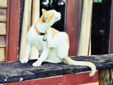 Treating Cats with Dog Flea and Tick Products