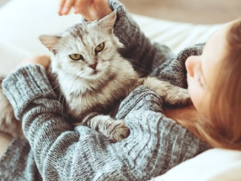 Cat Dander: 8 Things You Didn't Know