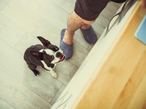 """3 Dog Behaviors You Can Accidentally """"Untrain"""""""