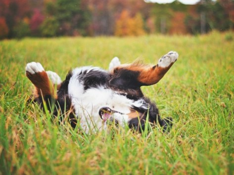 Keeping Fleas, Ticks, and Mosquitoes Away… Even in the Winter