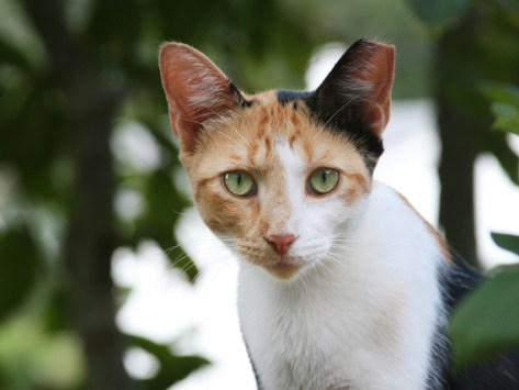Fleas, Ticks, and Feral Cats: What's Being Done?