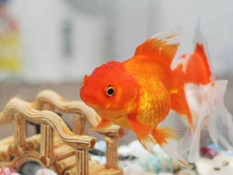 Who's Watching Whom? Inside the Mind of Your Pet Fish