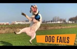 Dog Fails Compilation // October 2018