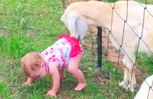 Funny Baby and Animals at the Zoo  - Funny Baby Fails Video