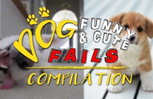 Dogs Funny and Cute Fails Compilation