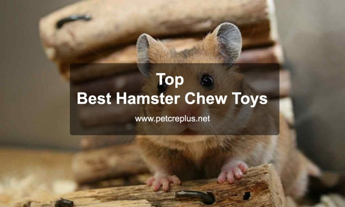 Top 35 Best Hamster Chew Toys