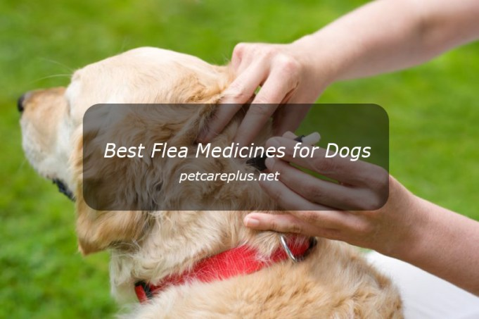 Best Flea Medicines for Dogs