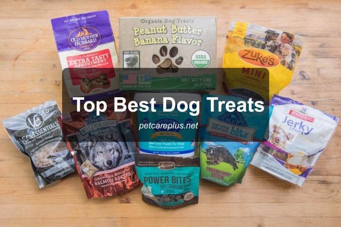 Top Best Dog Treats 2020