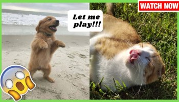 Funny Dogs And Cats Funny Dogs And Cat Videos Best Funny Cat And Dog Videos Pet Care Plus