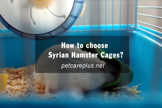 How to choose Syrian Hamster Cages?