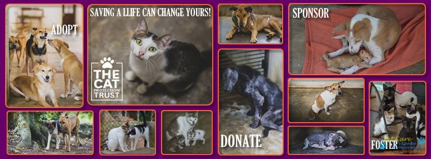 Cat Protection Trust Sri Lanka.jpg
