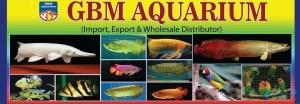 GBM Aquarium.jpg