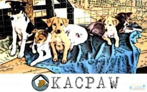 KACPAW.jpg
