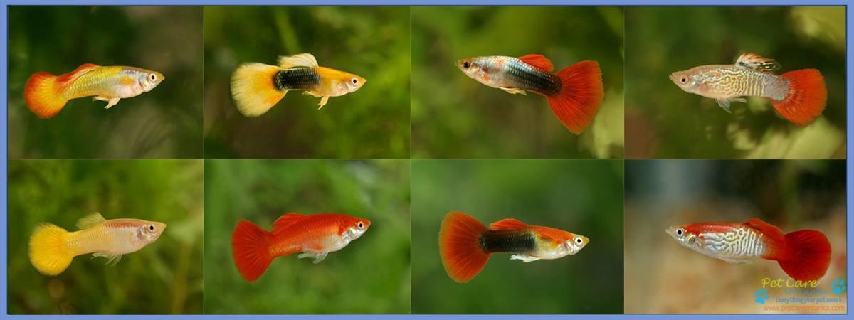 Sanjeewa Aquatics.jpg