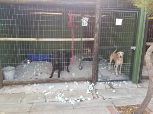 Naughty dogs