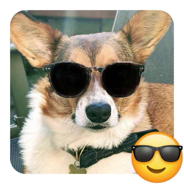 a dog in glasses