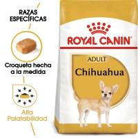 Chihuahua_Adult_Hero_NEW