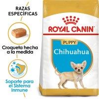 Chihuahua_Puppy_Hero_NEW