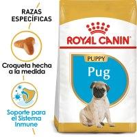 Pug_Puppy_Hero_NEW