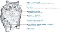 npc-felino-kitten-diagrama