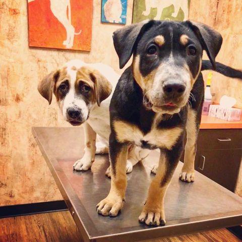 Pet Dental Services in Chandler, AZ