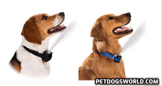Citronella Dog Collar Side Effects