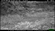 badger_scent mark [PHWR]