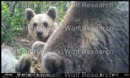 bears_gk [PHWR]