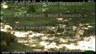 buzzaard_water pond [PHWR]