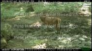 Red deer_vigilance [PHWR]