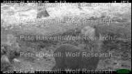 red deer_vigilant mum & fawn [PHWR]