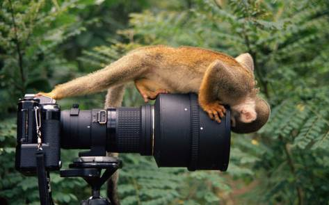 A squirrel monkey stands on and takes a look through the lens of a camera. Photo by conservation and wildlife photographer Pete Oxford.