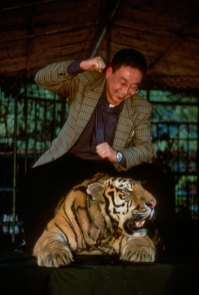 A man sits on top of a captive tiger while punching it. Photo by conservation photographer Pete Oxford.