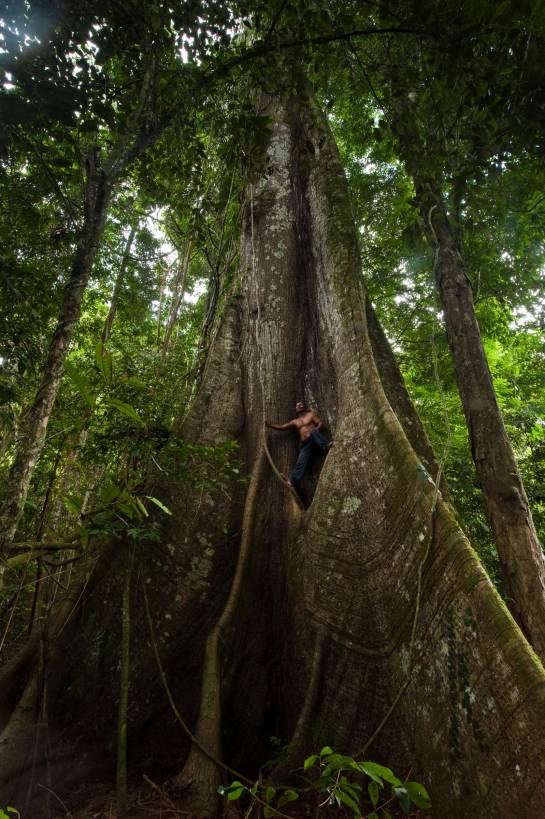 An indigenous man stand on the root structure of a Kapok tree. Photograph by conservation photographer and cultural photographer Pete Oxford.