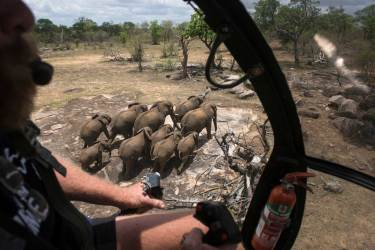 A herd of elephants are shown from the cockpit of a helicopter. Photo by aerial photographer Pete Oxford.