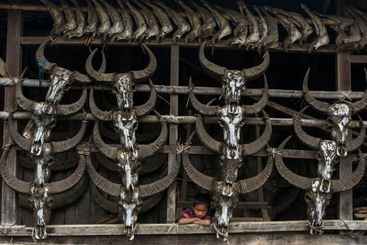 A Konyak Naga house displays a collection of buffalo skulls. Photograph by conservation photographer and cultural photographer Pete Oxford.