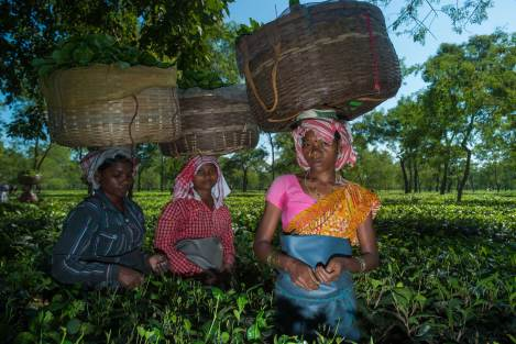 Tea pickers carry baskets of tea on their heads. Photo by indigenous person photographer Pete Oxford.