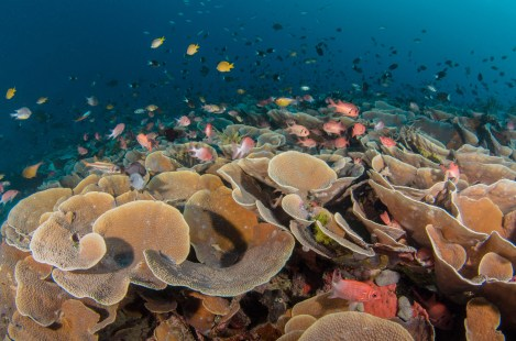 A diverse collection of coral is seen with a number of small fish species swimming through and above them. Photography by conservation and underwater photographer Pete Oxford.Photography by conservation and underwater photographer Pete Oxford.