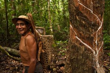 An indigenous man bleeds a balata tree for the sap which produces a natural latex. Photograph by conservation photographer and cultural photographer Pete Oxford.
