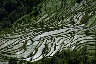 Rice paddies reflect light back at the camera. Photo by landscape photographer Pete Oxford.