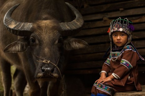 A Hani child sits next to a water buffalo. Photograph by indigenous people photographer Pete Oxford.