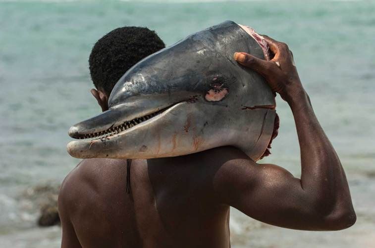 The head of a dolphin caught as bycatch is carried on the shoulder of a man. Photo by conservation photographer Pete Oxford.