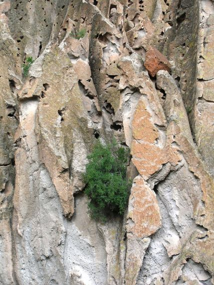 Leaning In, Bandolier, NP, NM