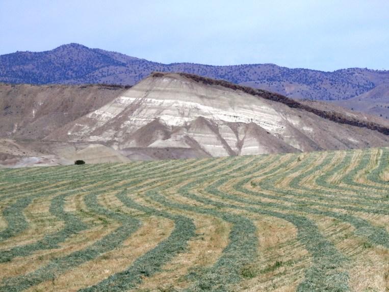 Field near Painted Rock, Oregon